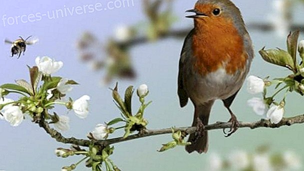 Have you heard that bird's song?  Take care and strengthen your Spirituality