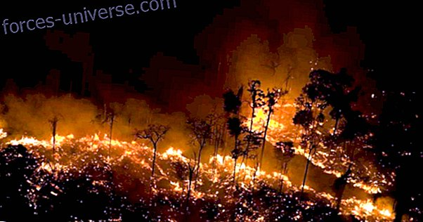 Message for Lightworkers: Fires in the Amazon Rainforest