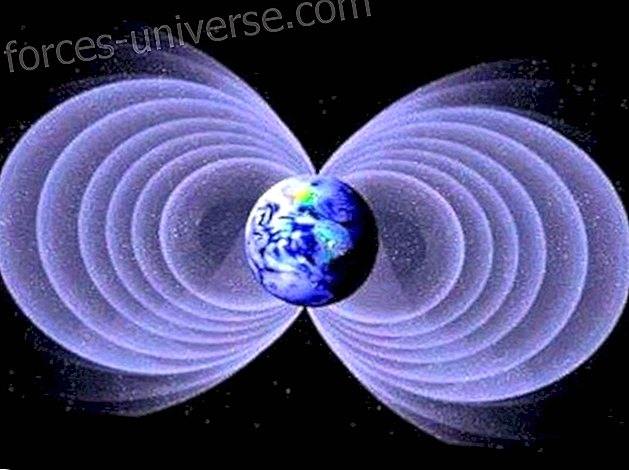 Schumann's frequency is so powerful that thanks to it we are all connected living beings