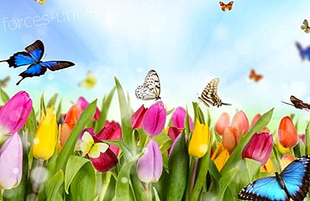 Get ready for the arrival of spring - Wisdom and knowledge