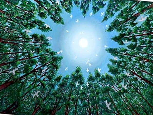 What is the Ascension of the Human Being?… December 22, 2012 Wisdom and knowledge 2021