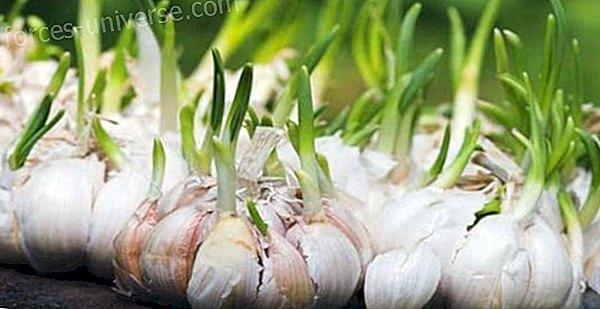 Helbredende egenskaper ved krydder og aromatiske urter - Bevisst liv