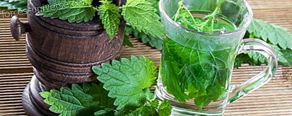 Nettle Benefits: The Eternal Youth Plant